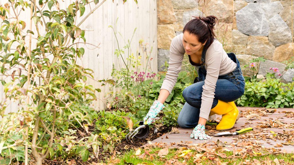 как да подготвите градина за зимата