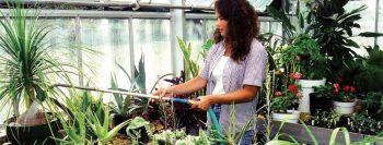 Основи на градинарството